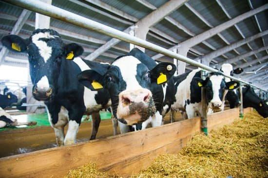 La normativa de descanso en el transporte de animales, en vigor en su totalidad a partir del viernes 5 de junio